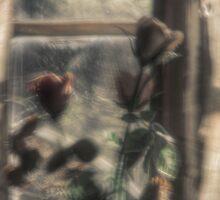 19.9.2009: Dream of Roses by Petri Volanen