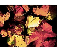 Fallen Leaves Photographic Print