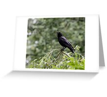 Crow Contemplation Greeting Card