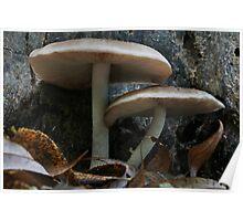 Fawn Mushrooms Poster