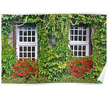 Ivy, geraniums and 2 windows........ Poster