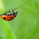 Hang on! by Melinda Gaal