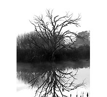 """Blackstone Tree"" B@W Photographic Print"