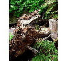 Wooden T Rex Photographic Print