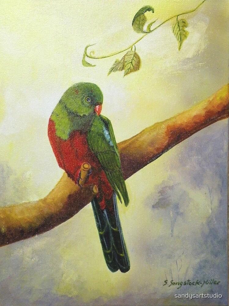 King Parrot,  Killarney country Qld Australia. by sandysartstudio