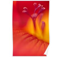 Freesia abstract Poster