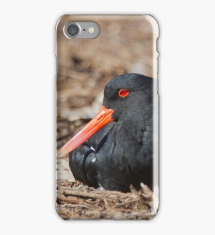 Sunbathing Oystercatcher Style iPhone Case/Skin