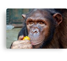 Chimp Mother Canvas Print