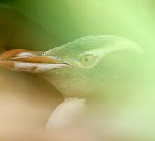 Yellow-eyed Penguin, Curio Bay, New Zealand by christopher hodgson