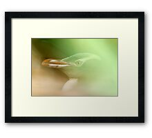 Yellow-eyed Penguin, Curio Bay, New Zealand Framed Print