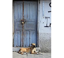 Dog Next to a Wood Door Photographic Print