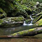 Cool water by Forrest Tainio