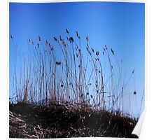 Cattails Poster