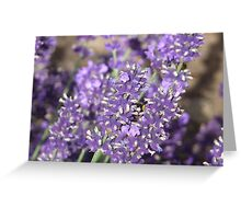 the purple flower, with Bee Greeting Card