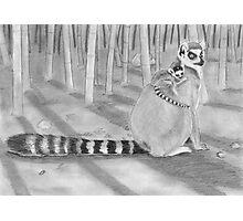 Lemur katta Photographic Print