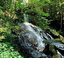 Bear Creek Falls by Janie Oliver