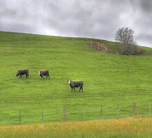 Cows by Lois Romer