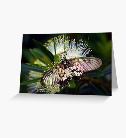 Glasswings Greeting Card