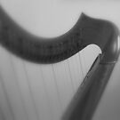 Curves and Straight Lines© by walela