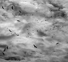 Makanda Vultures by Daniel Owens