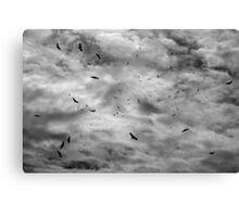 Makanda Vultures Canvas Print