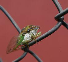 Cicada by Adrena87