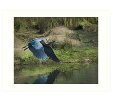 Great Blue Heron In The Salt Marsh Art Print
