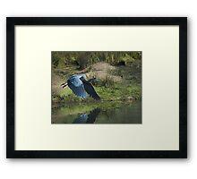 Great Blue Heron In The Salt Marsh Framed Print