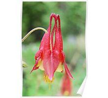 Devil's Nectar Poster
