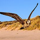 Bird by John Peel