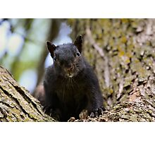 Tiny Bear Photographic Print