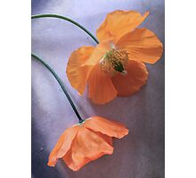 Poppy Paradise Photographic Print