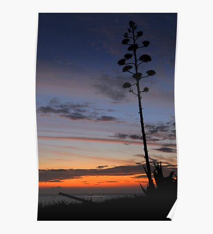 Coromandel Coast at sunset  Poster