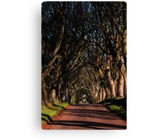 Dark Hedges Canopy Canvas Print