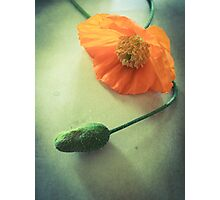 Poppy Dream Photographic Print