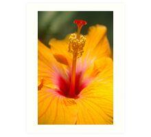 Hibiscus sunshine Art Print