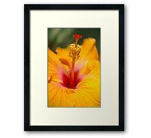 Hibiscus sunshine Framed Print