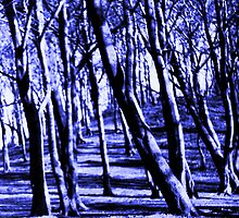 Naked trees in winter light by George Hunter