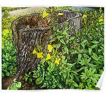 Hollow Stump and Primrose Poster
