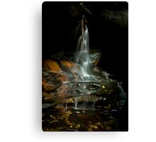 From a darkened corner spings life Canvas Print