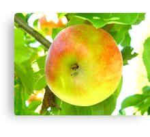 Ripe Apple Canvas Print