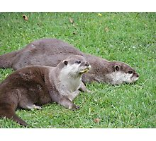 Otters Photographic Print