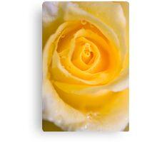 Sunburst rose Canvas Print