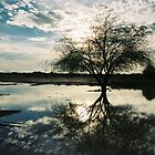 Puddle Tree by Kirstyshots