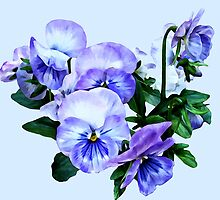 Group of Purple Pansies and Leaves by Susan Savad