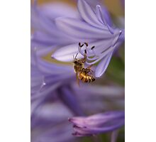 Yellow jacket Purple flower Photographic Print