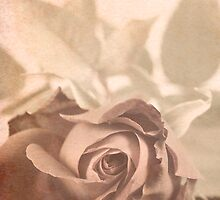 Victorian rose by Sandra O'Connor