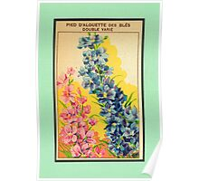 Vintage French Seed Packet Poster
