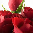 Red roses by Sandra O'Connor
