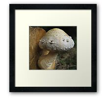 Shaggy Scalycap Framed Print
